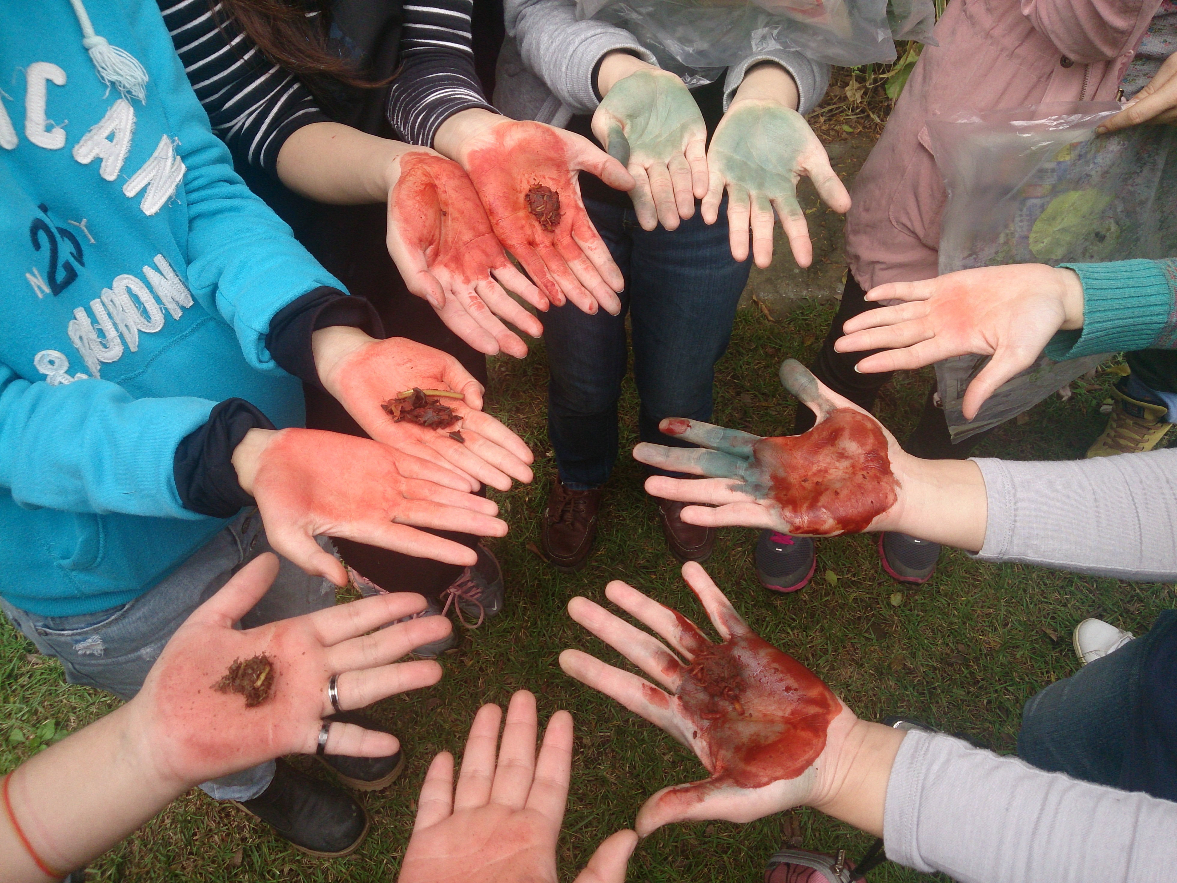 field school of natural dyeing