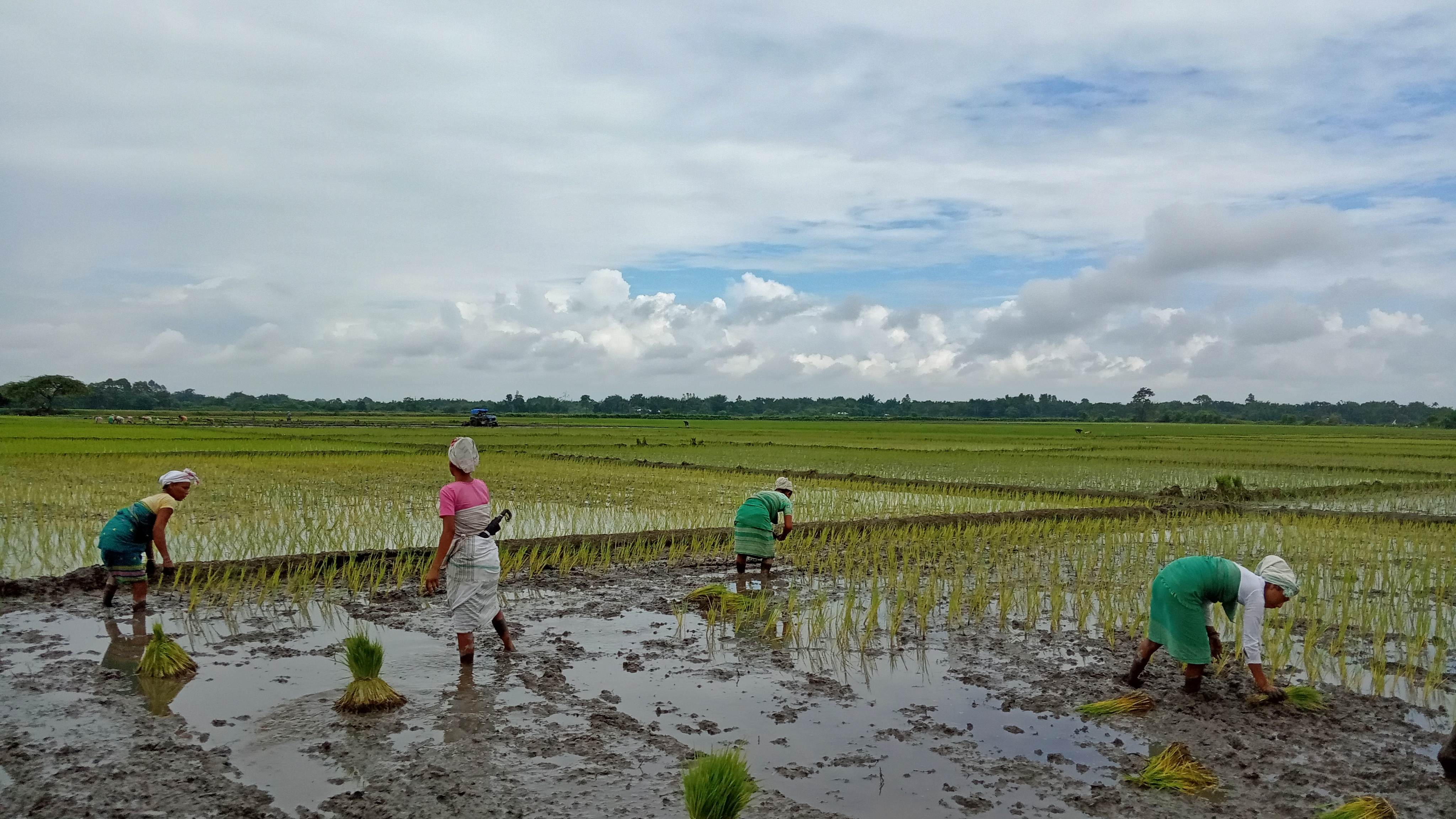 Rice Cultivation, Covid-19, flood, women, gender role